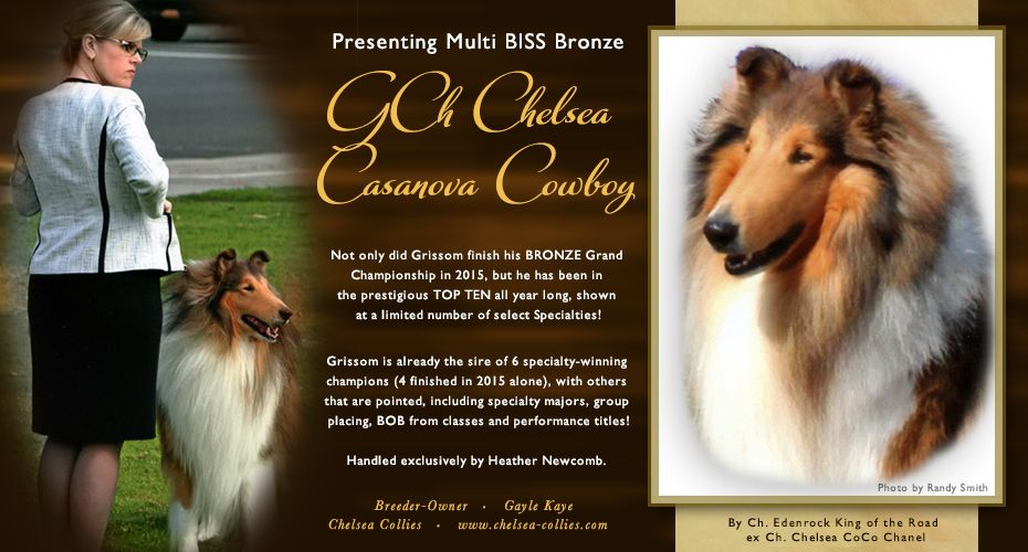 Mbss Bronze Gch Chelsea Casanova Cowboy Rough Collie Collie Dog Dog Cat