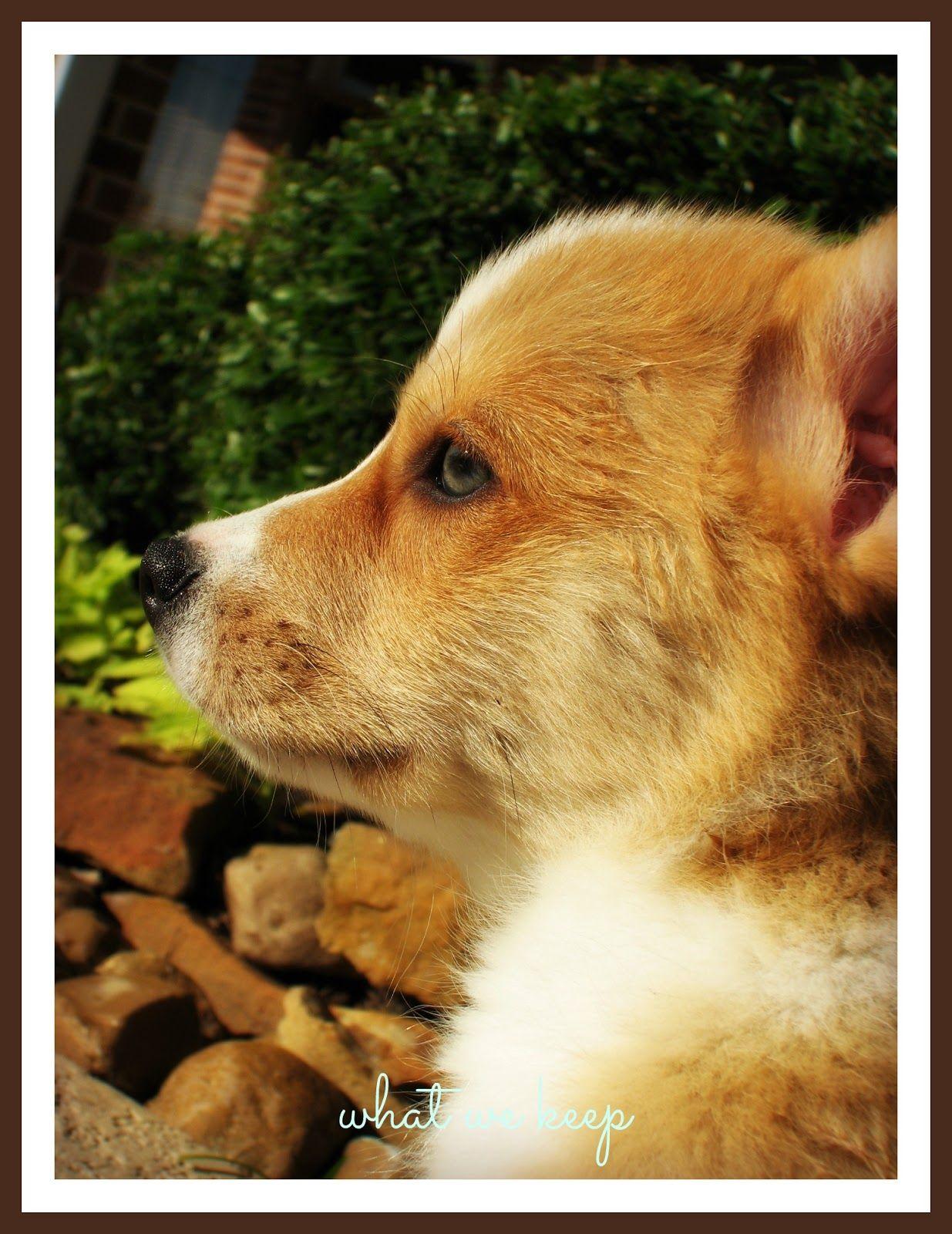 Henry pup cute puppy cute