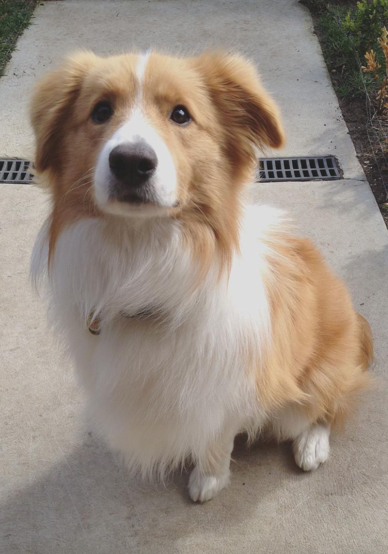 Top 5 Smartest Dog Breeds Dog Breeds Medium Smartest Dog Breeds Cute Dogs Breeds