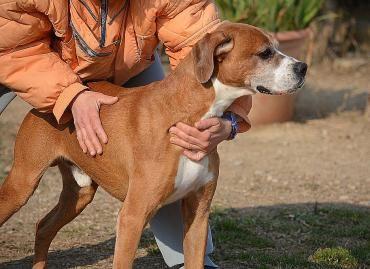 Roni Boxer Mischling 10 Jahre Top Fit Hunde Und Katzenvertraglich Hund Und Katze Tiere Suchen Ein Zuhause Haustier