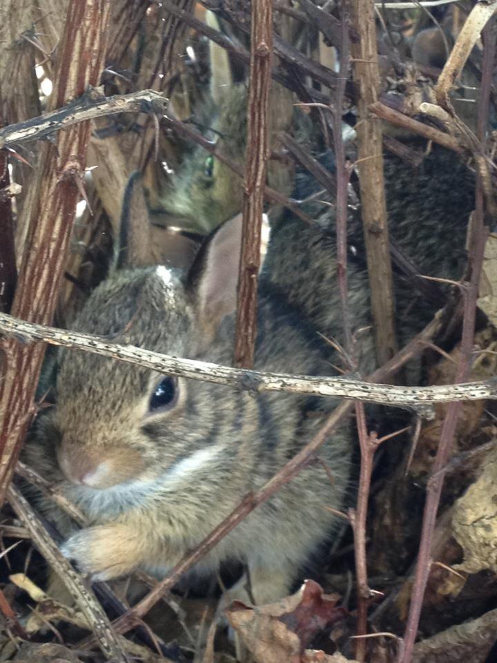 Cute baby bunnies in my front yard. | Animals | Cute baby ...