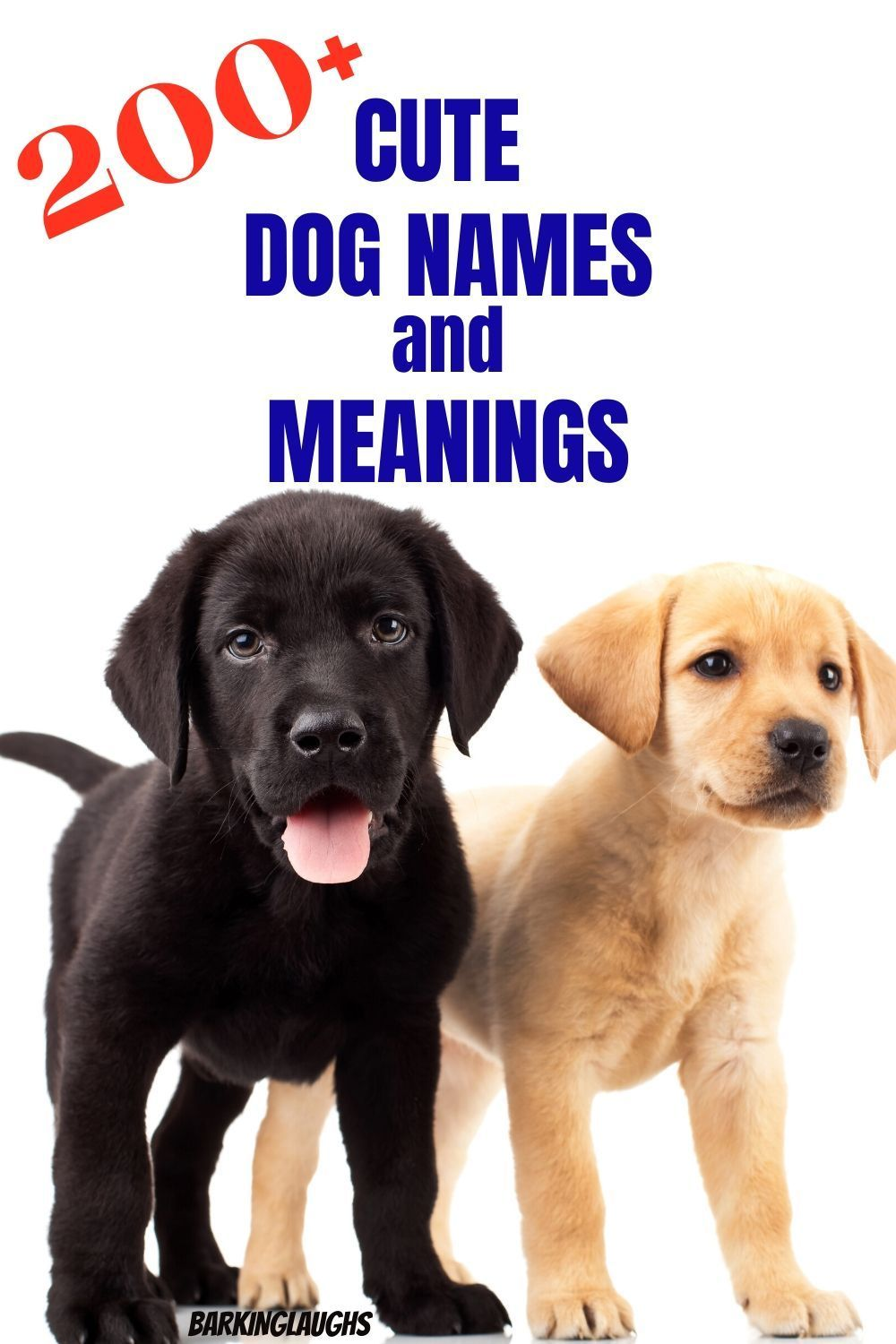Unique Dog Names With Meanings Dog Names Husky Dog Names