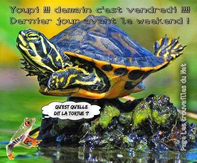 Youpi demain c 39 est vendredi dernier jour avant le - Image tortue rigolote ...