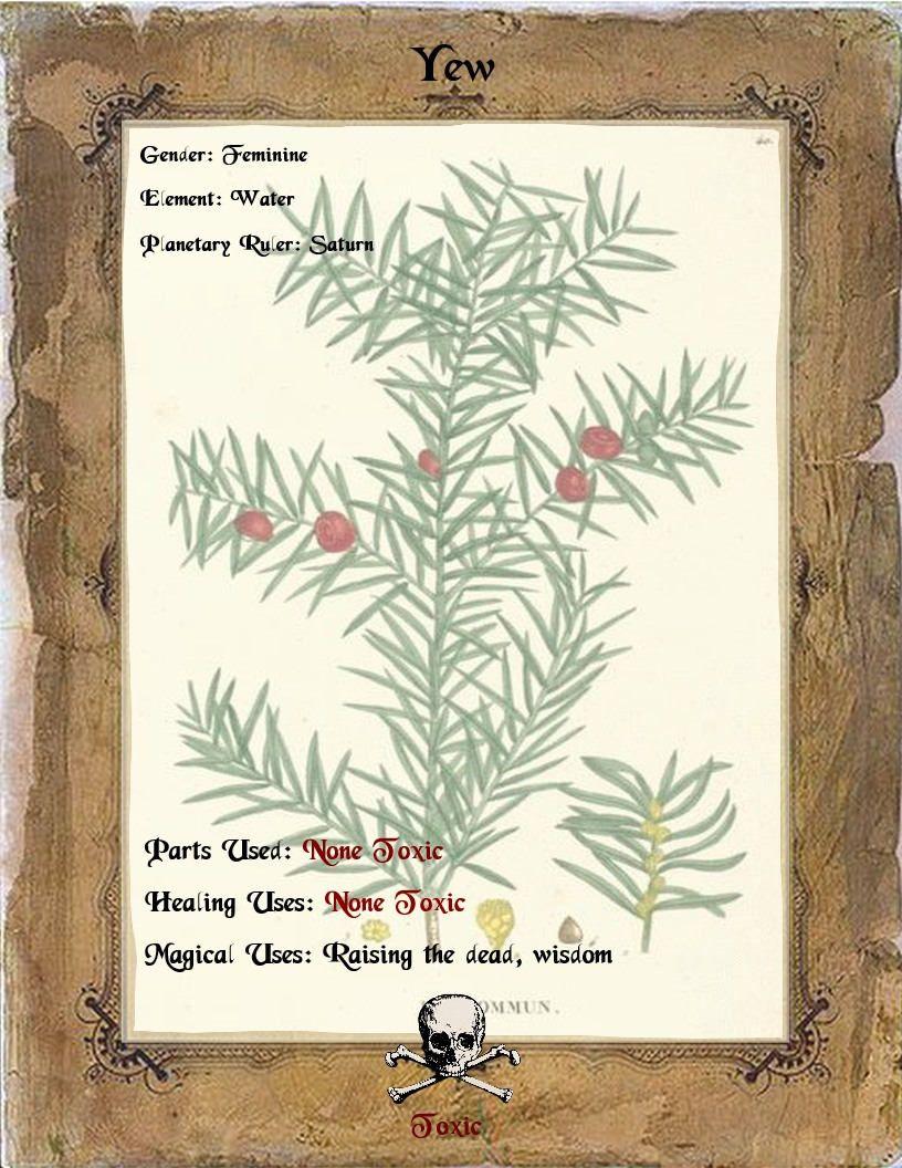 Pin by KazanCauldron on herbal Grimoire Herbalism, Raise