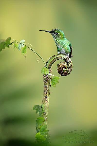 Vogel auf Farn- Aufbruchsstimmung