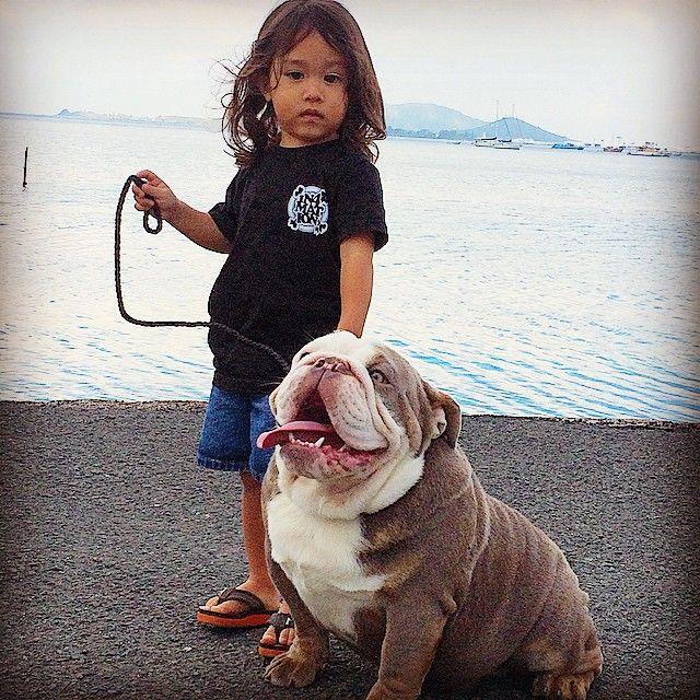 Pin By Slick Rick On Doggy Dog World Bully Dog Cute Bulldogs