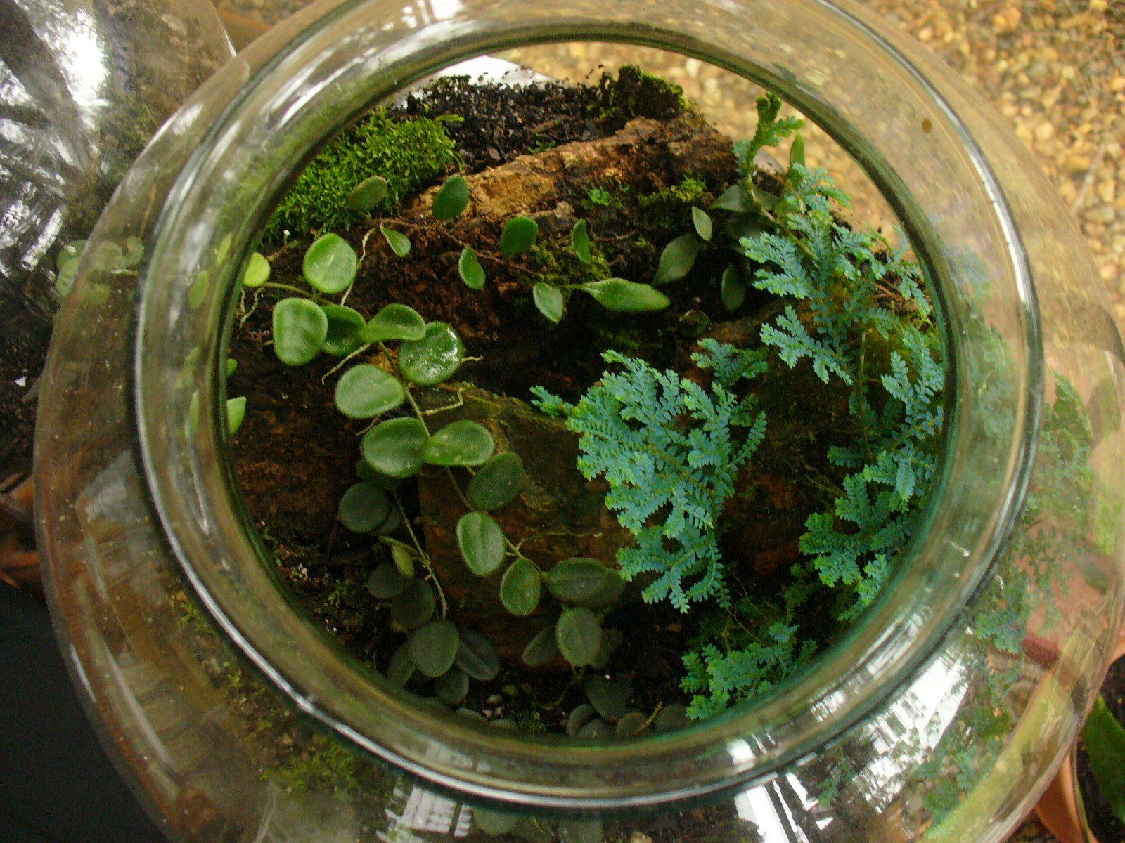 Hoya Serpens In A Terrarium Hoya Terrarium Decor Home Decor