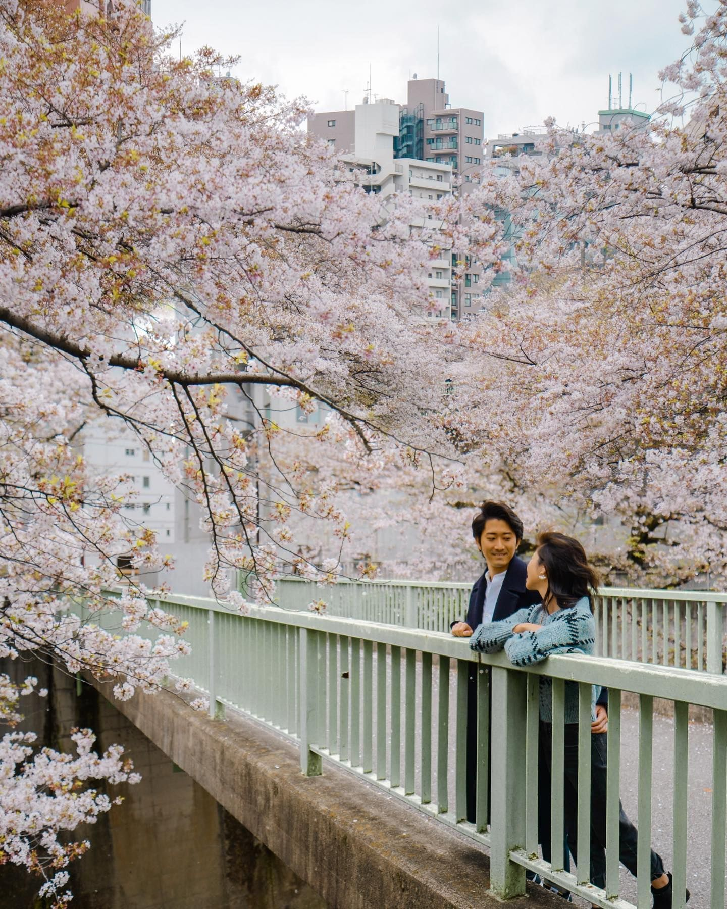 Cherry Blossom Couple In 2020 Old Things Happy Birthday Blossom