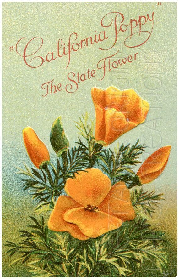 Digital download california poppy state flower floral garden digital download california poppy state flower floral garden orange mightylinksfo