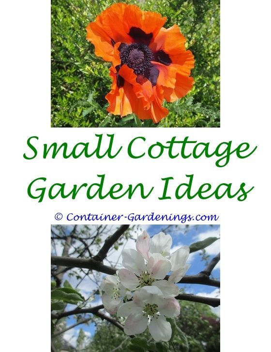 Ve able Container Gardening For Beginners