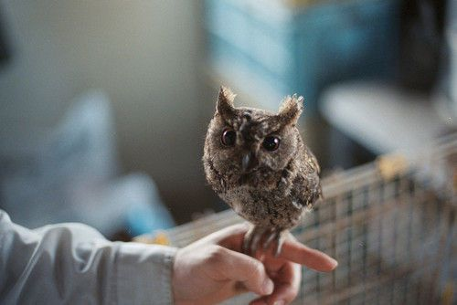 the cutest owl owls pinterest owl animal and bird