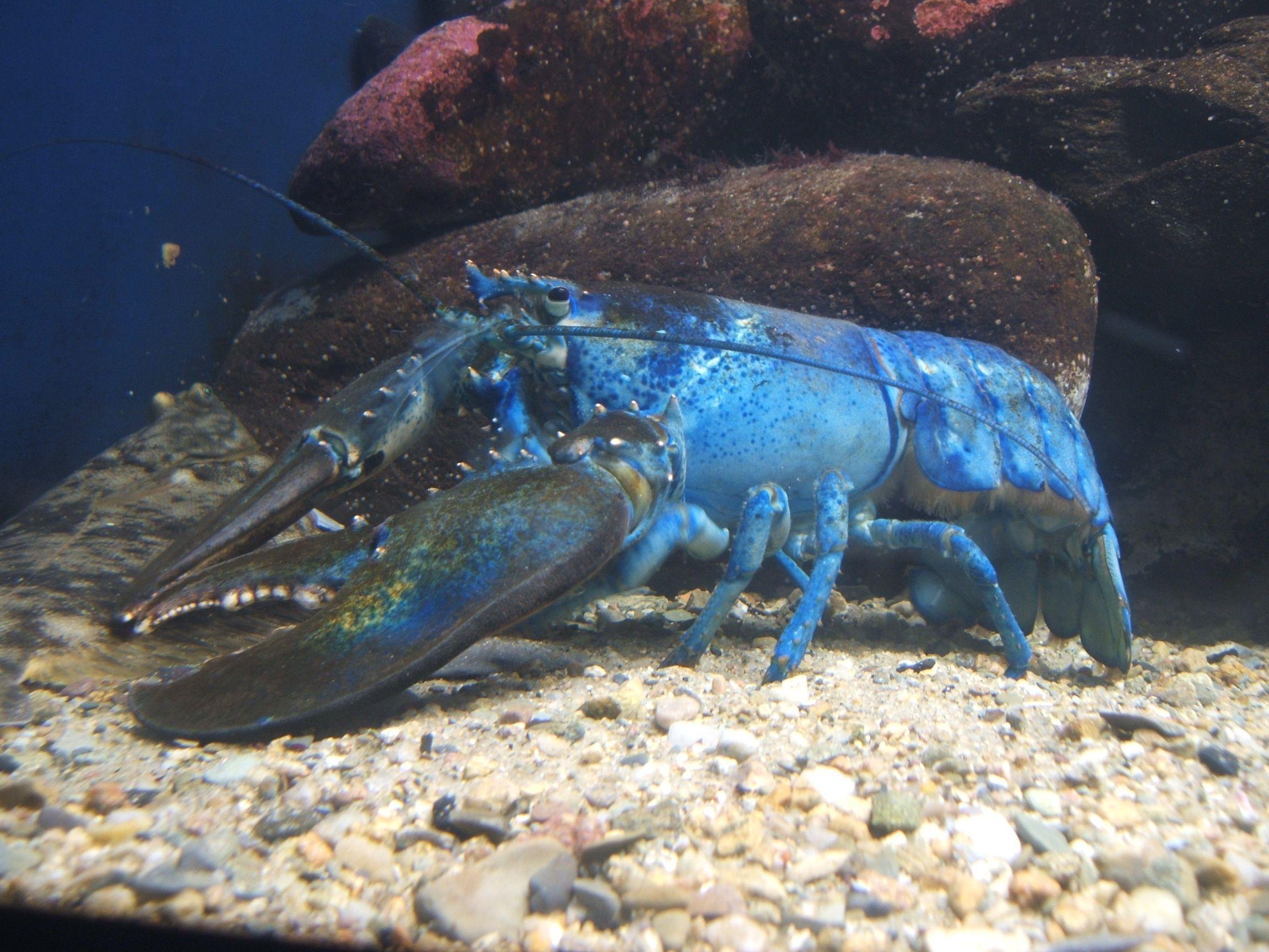 20 Stunning Sea Creatures Around The World