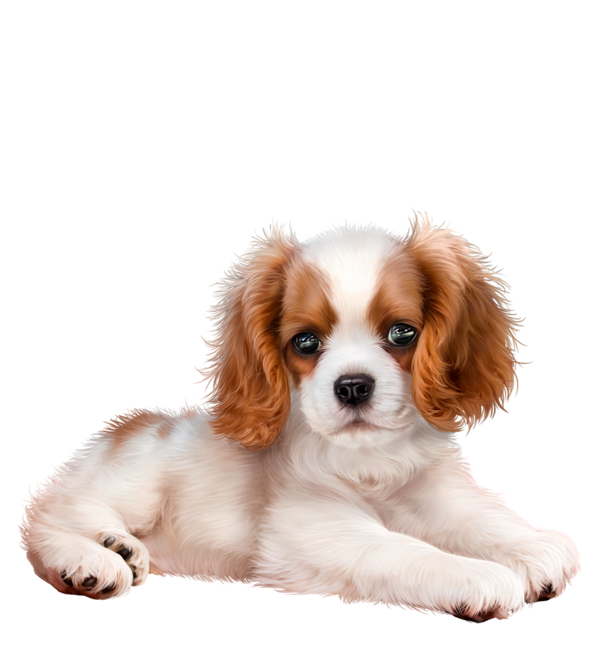 Chiens Dog Puppies Wallpapers Dessin Cute Animals Puppy Cartoon