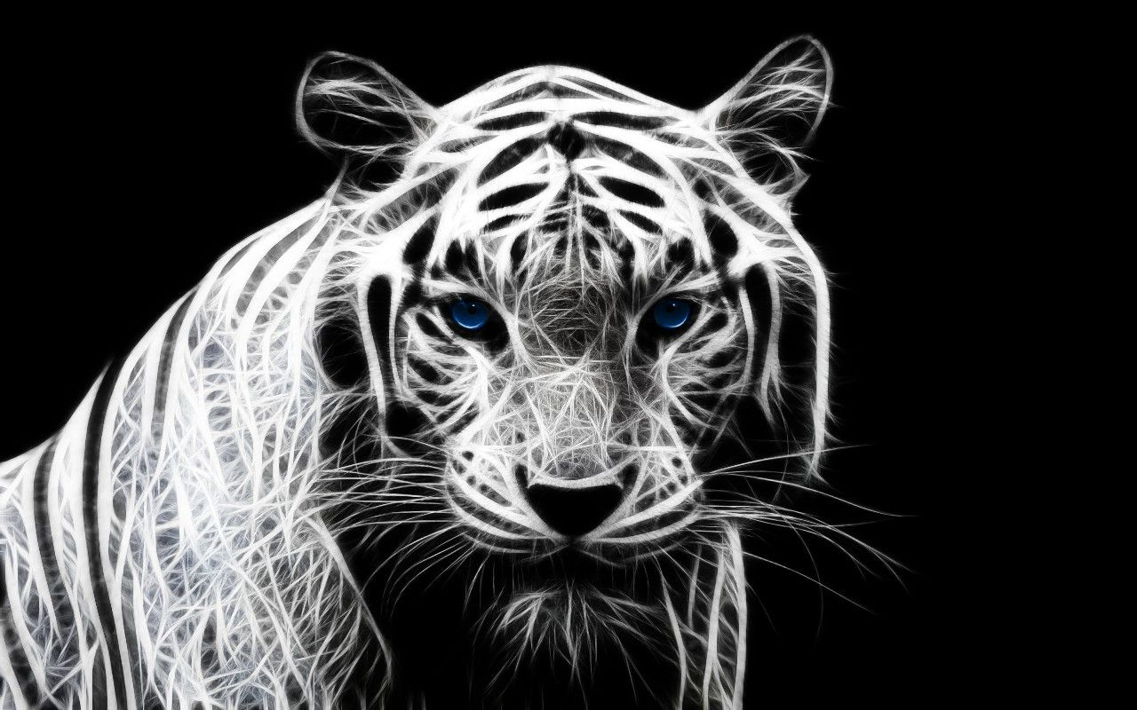 Tiger white tiger hd wallpaper acc world hd wallpapers animals tiger white tiger hd wallpaper acc world hd wallpapers animals 19201080 white tigers wallpapers thecheapjerseys Image collections