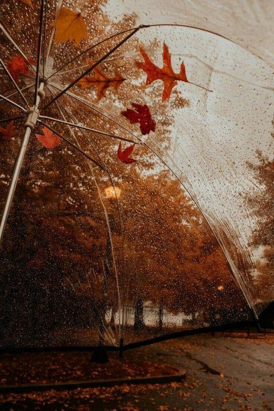30+ Best Free Fall Wallpaper & Autumn Wallpaper Op