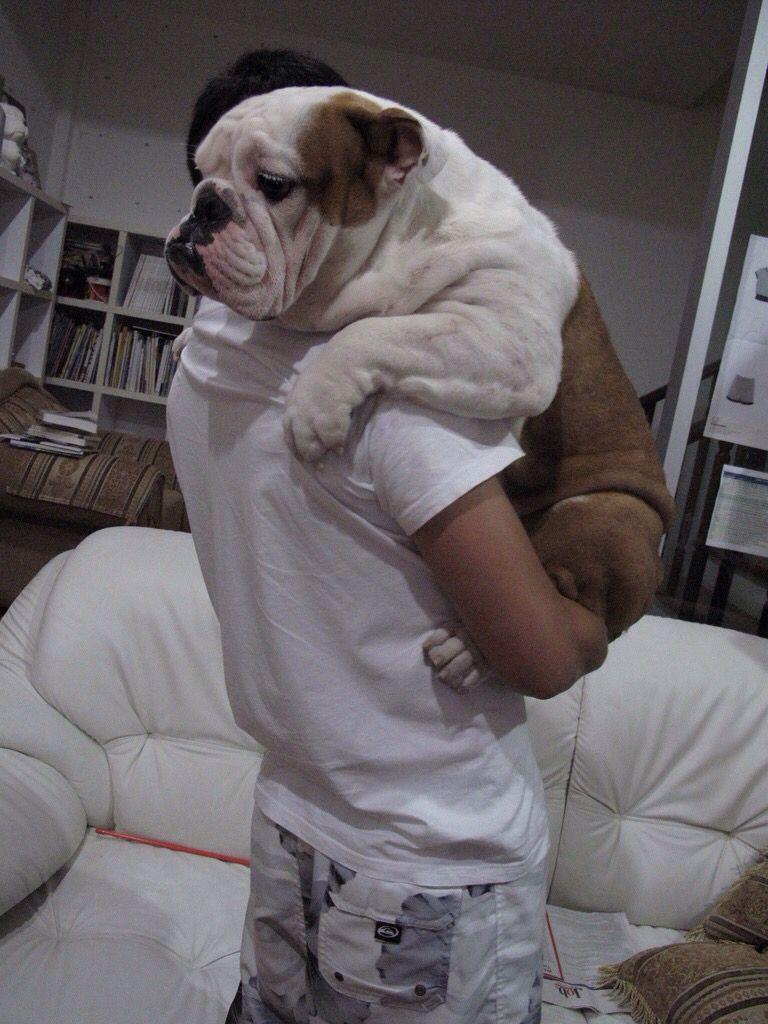 I Thought I Heard Something Bulldog Puppies English Bulldog