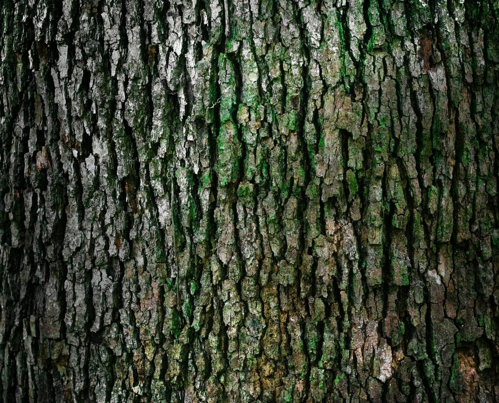 Tree Bark Google Search Tree Bark Texture Tree Textures Tree Images