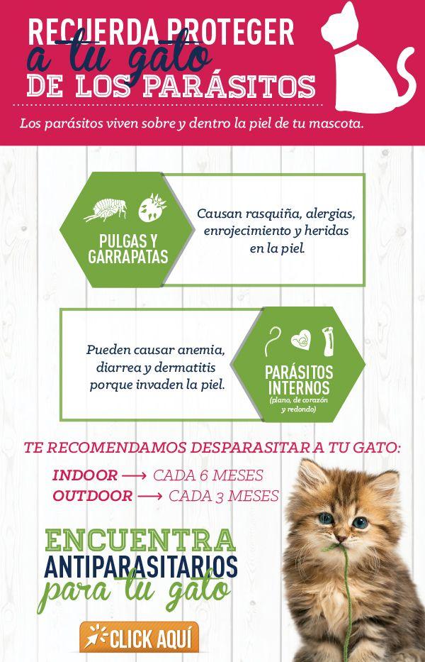 Cuidar A Tu Perro De Los Parásitos Evita Problemas De Comportamiento Y Problemas Secundarios De Salud Consejos Para Mascotas Mascotas Antipulgas Para Perros