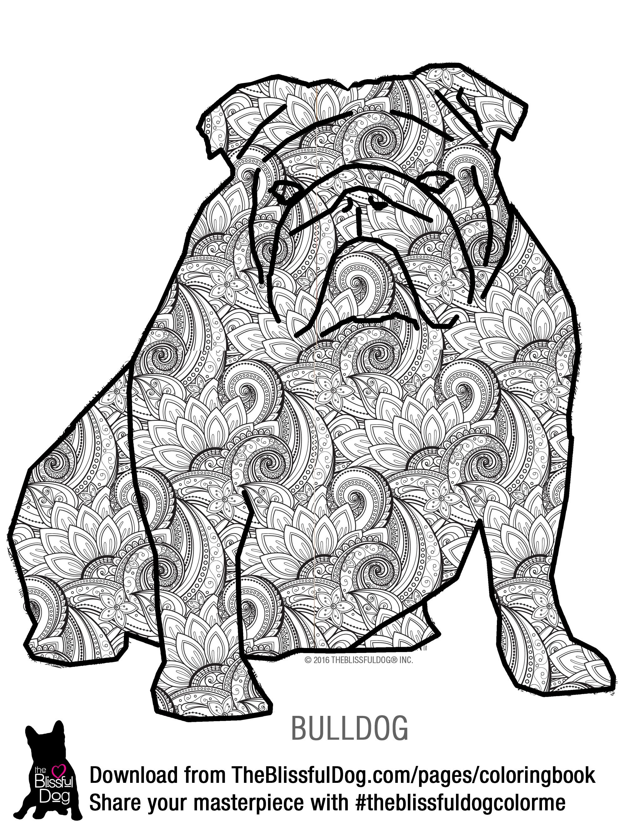 Here is the Bulldog Coloring Book Page big file for high