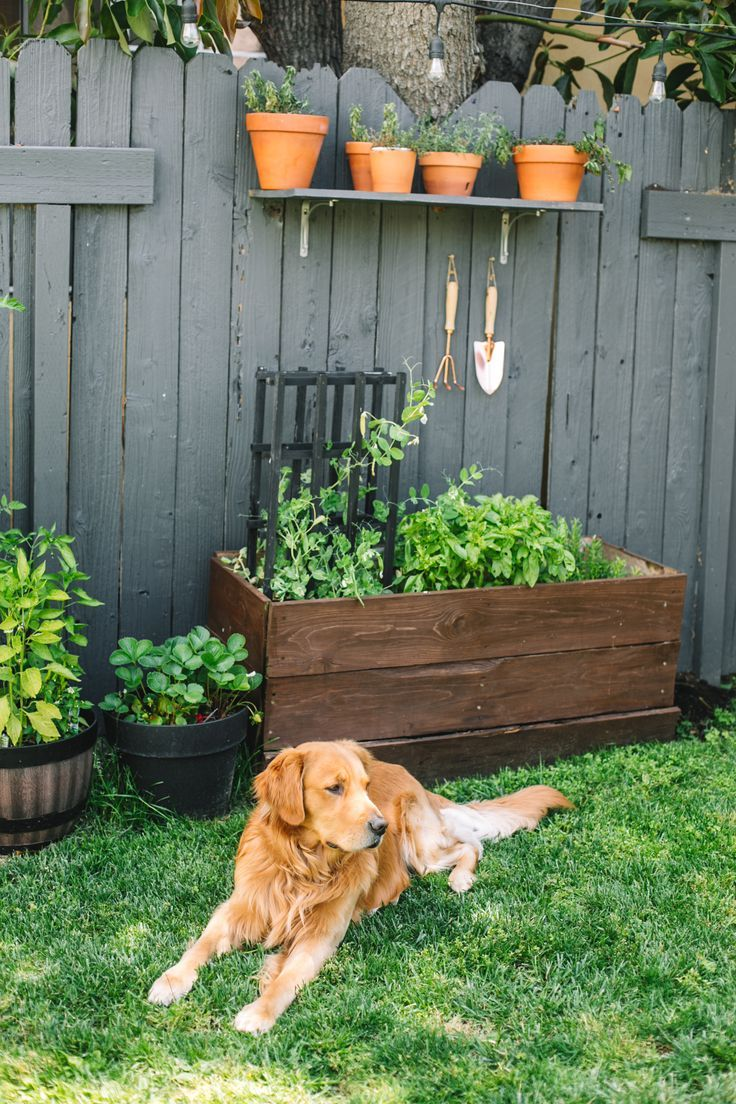 Photo of How to grow a small vegetable and herb garden – College Housewife