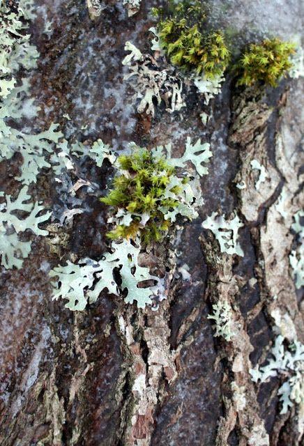 RunoTalo: Viiltävässä hiljaisuudessa Huikaisevan kirkkaan sinitaivaan alla Valkoisessa hangessa Edessäni rakas vanha puu Häikäistyn kauneudesta Tänään tässä hetkessä on kaikki