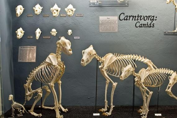 Museum Of Osteology And Skulls Unlimited Animal Skeletons
