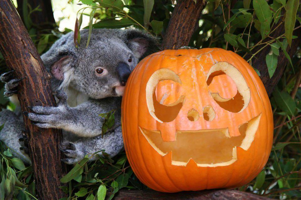 Koalalloween...