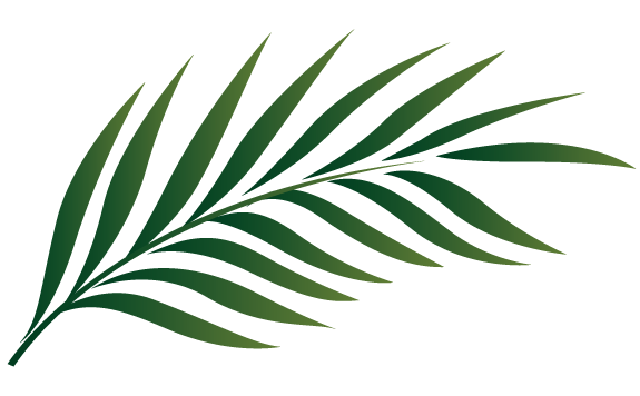 palm branch image free cliparts that you can download to you palms rh pinterest com Palm Leaves for Palm Sunday Palm Branch Clip Art Outline