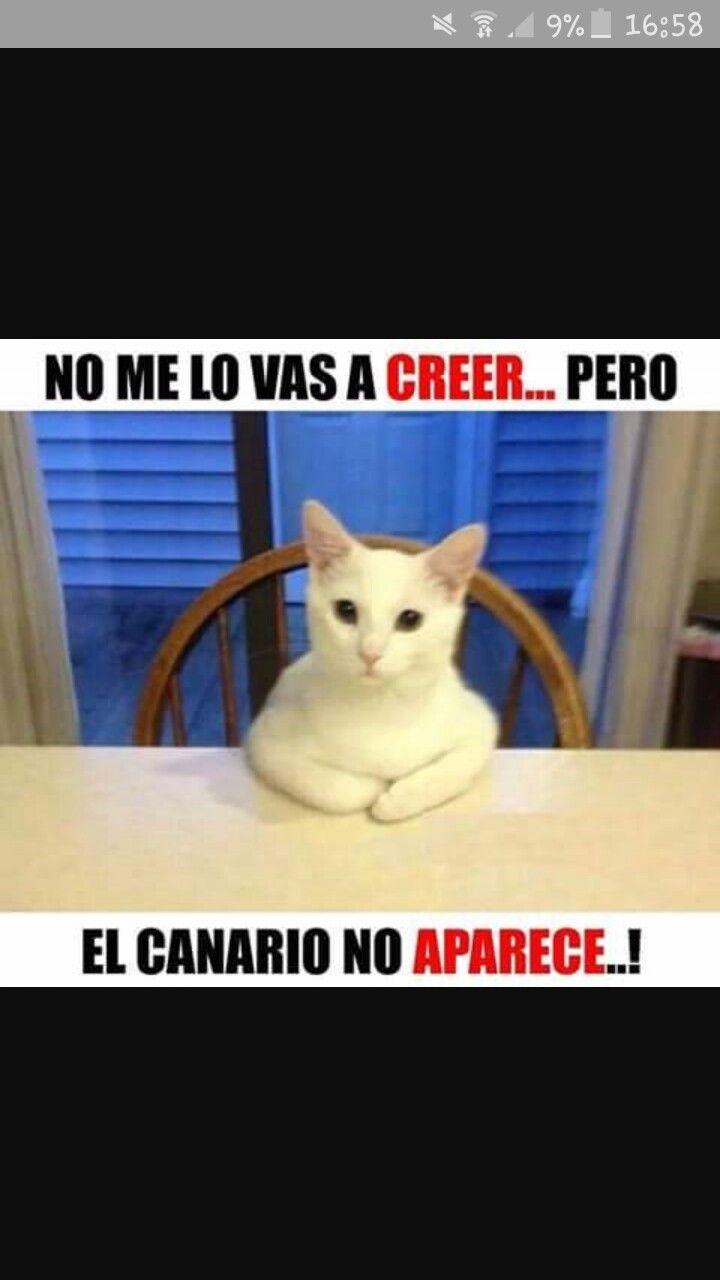 Chiste Memes Divertidos Humor Divertido Sobre Animales Chiste De Gatos