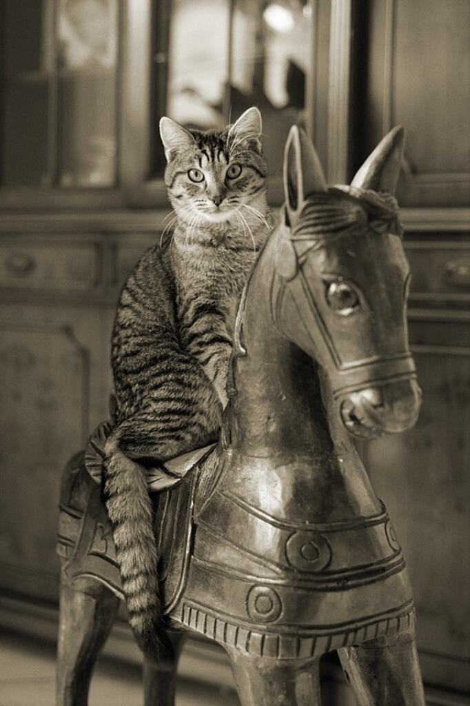 """""""Cavalo selado só passa uma vez."""""""