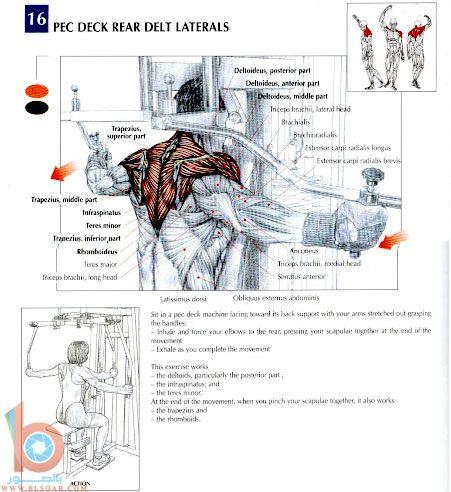 صور لكيفية تقوية عضلات الظهر والكتفين