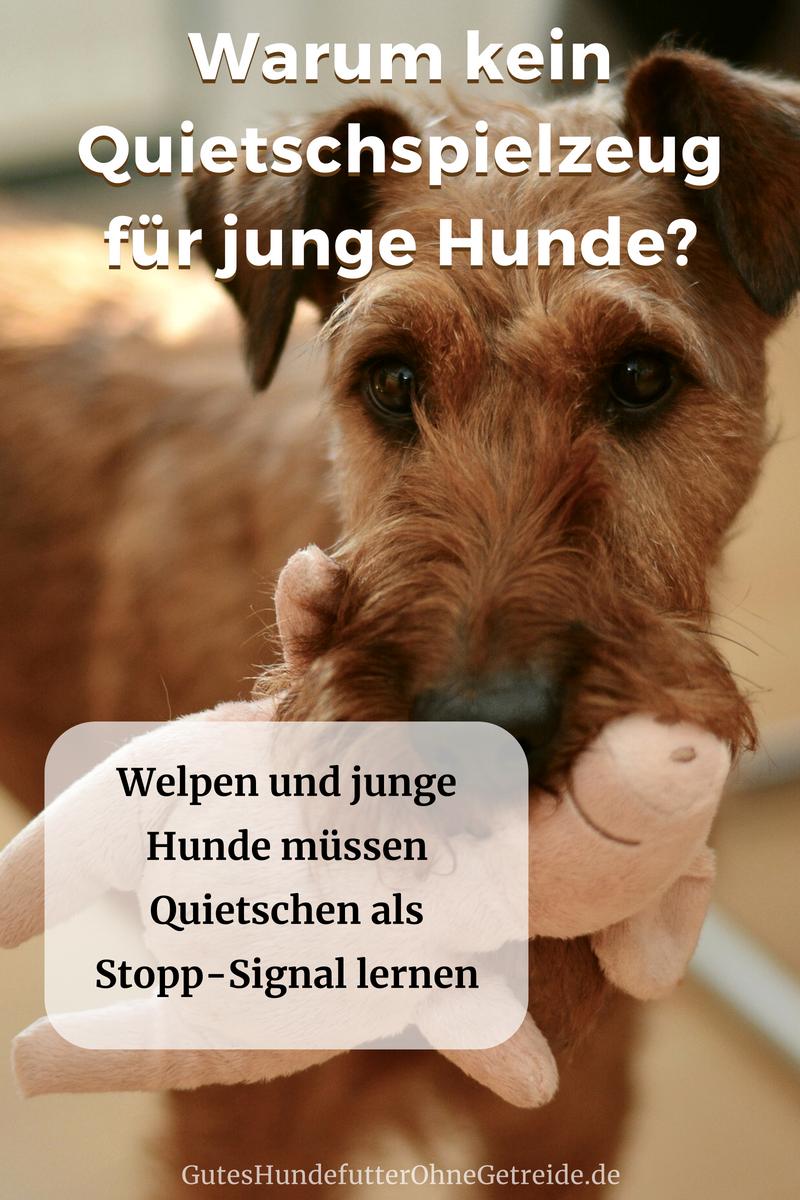 QuietschSpielzeug für Hunde Spielzeug hund, Hunde und