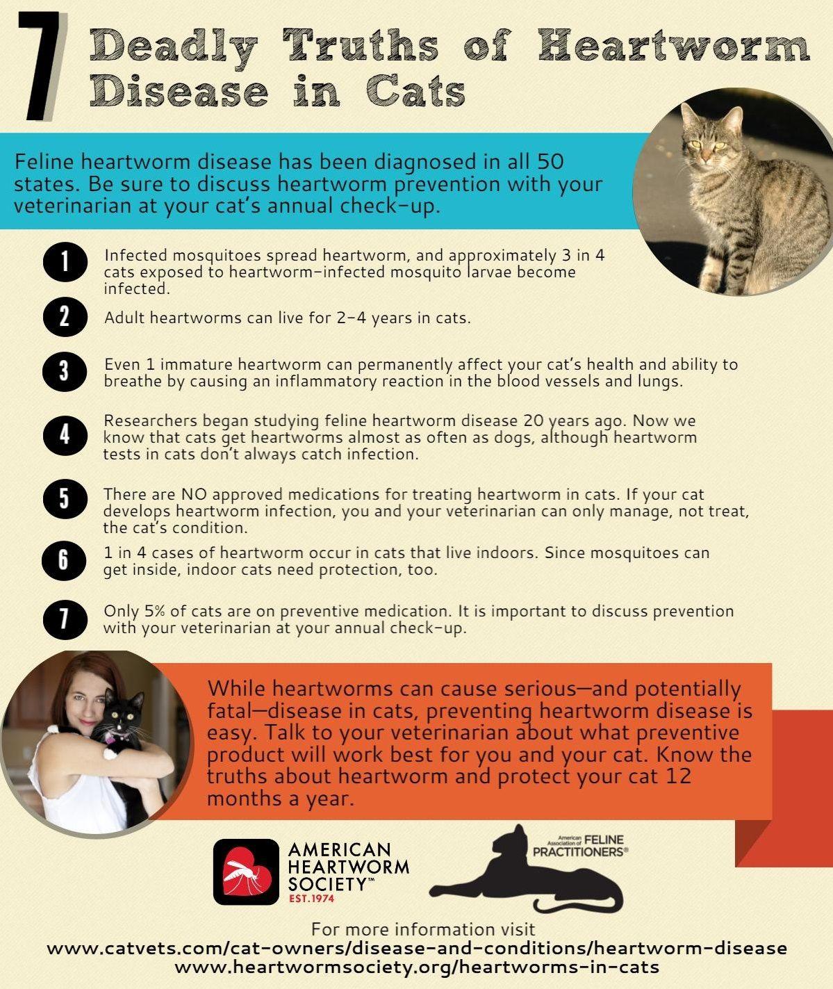 Heartworm Disease American Association Of Feline Practitioners Heartworm Heartworm Prevention Heartworm Disease