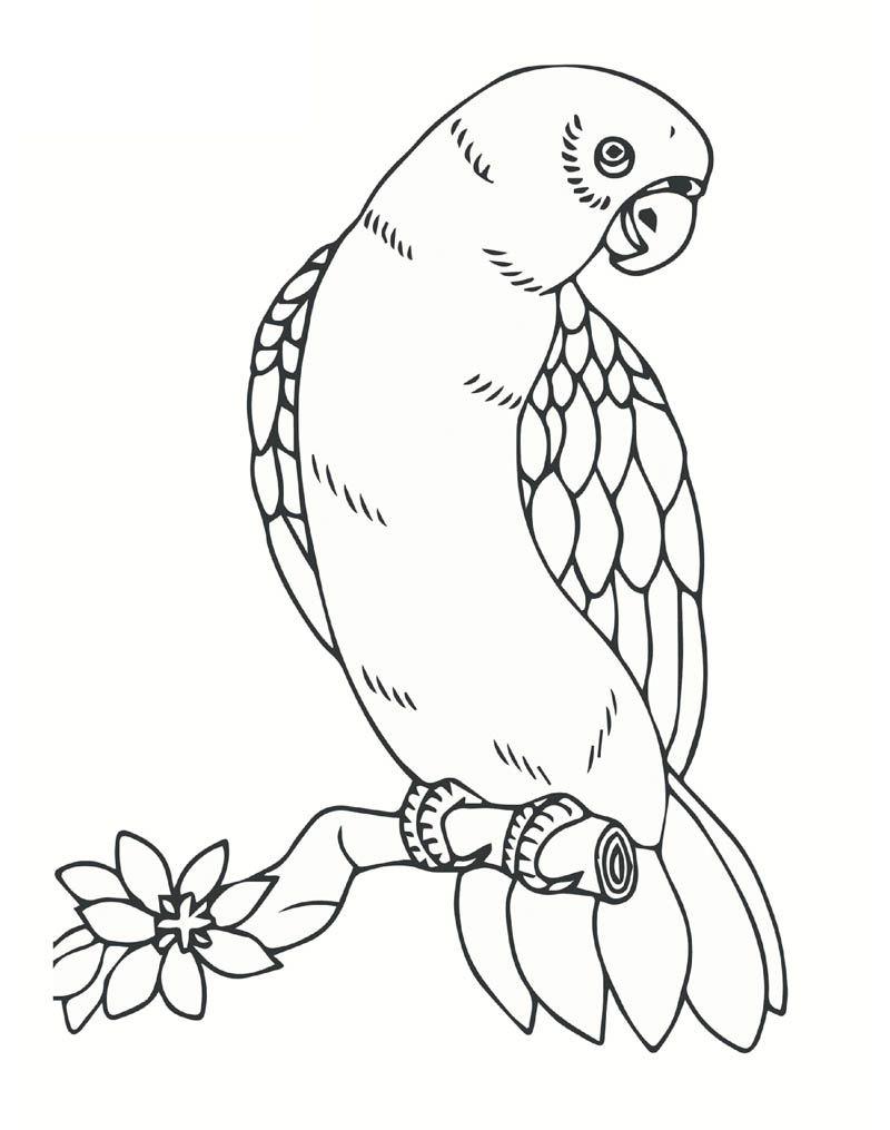 Yaprak Etkinligi Boyama Sayfalari Papagan