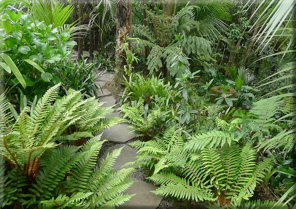 Tropical Garden Ideas Nz titirangi garden - stepping stones from lanzscapes.co.nz | garden