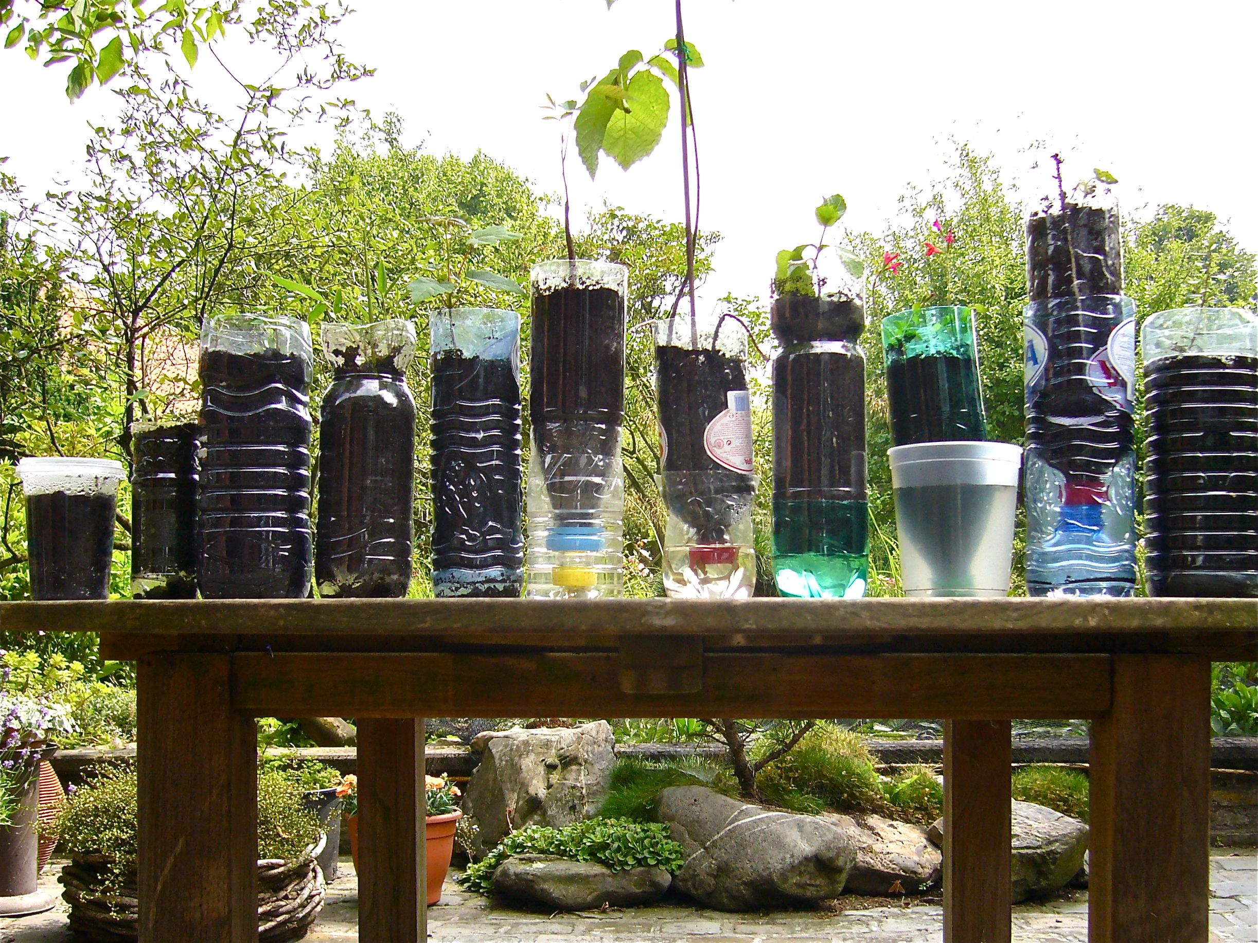 Vegetable container garden ideas - Growing Vegetables And Tree Saplings In Recycled Bottles Pots And Trays Willem Van Cotthem Vegetable Gardeningcontainer