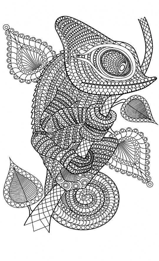 Cameleon coloring page Animal