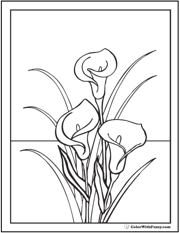 Calla Lily Coloring Pages Lilies Drawing Calla Lily Colors Coloring Pages