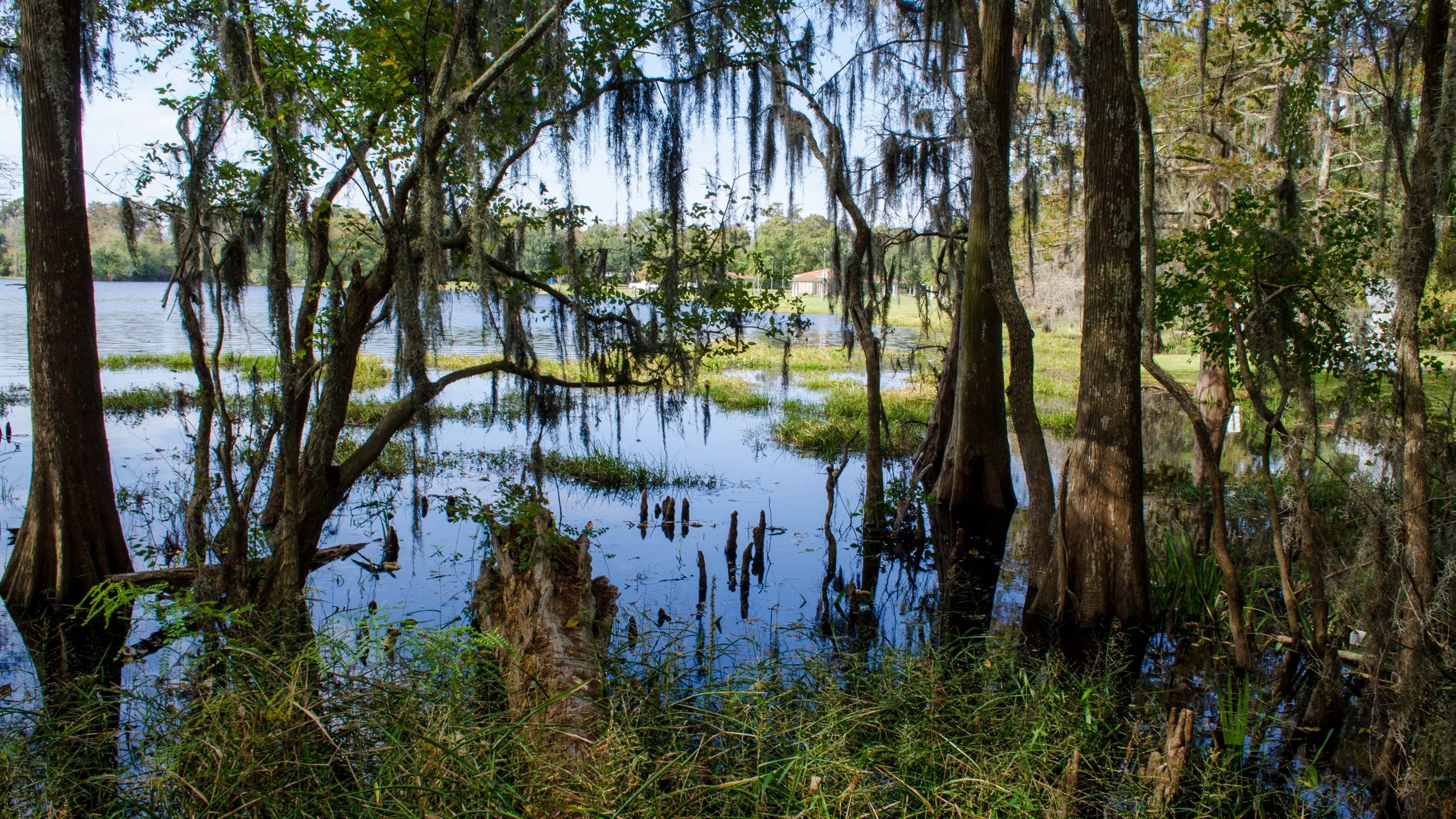 20170310 swamp wallpaper 1080p windows, 1844046