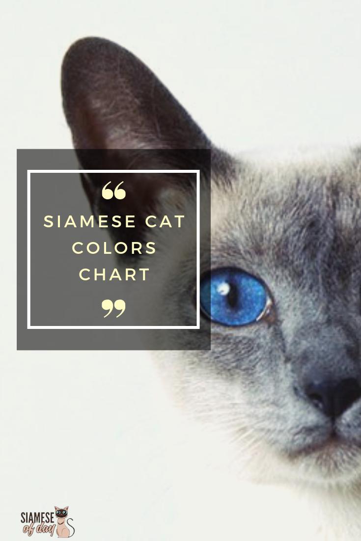 Siamese Cat Colors Chart Cat colors, Siamese cats