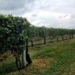 Long Island Winery Tour ~ Part 1 ~ Bedell Celars, Lenz Winery, Corey Creek Vineyard, Castello di Borghese