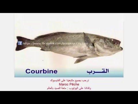 أسماء الاسماك بالمغرب الجزء الثالث Fish