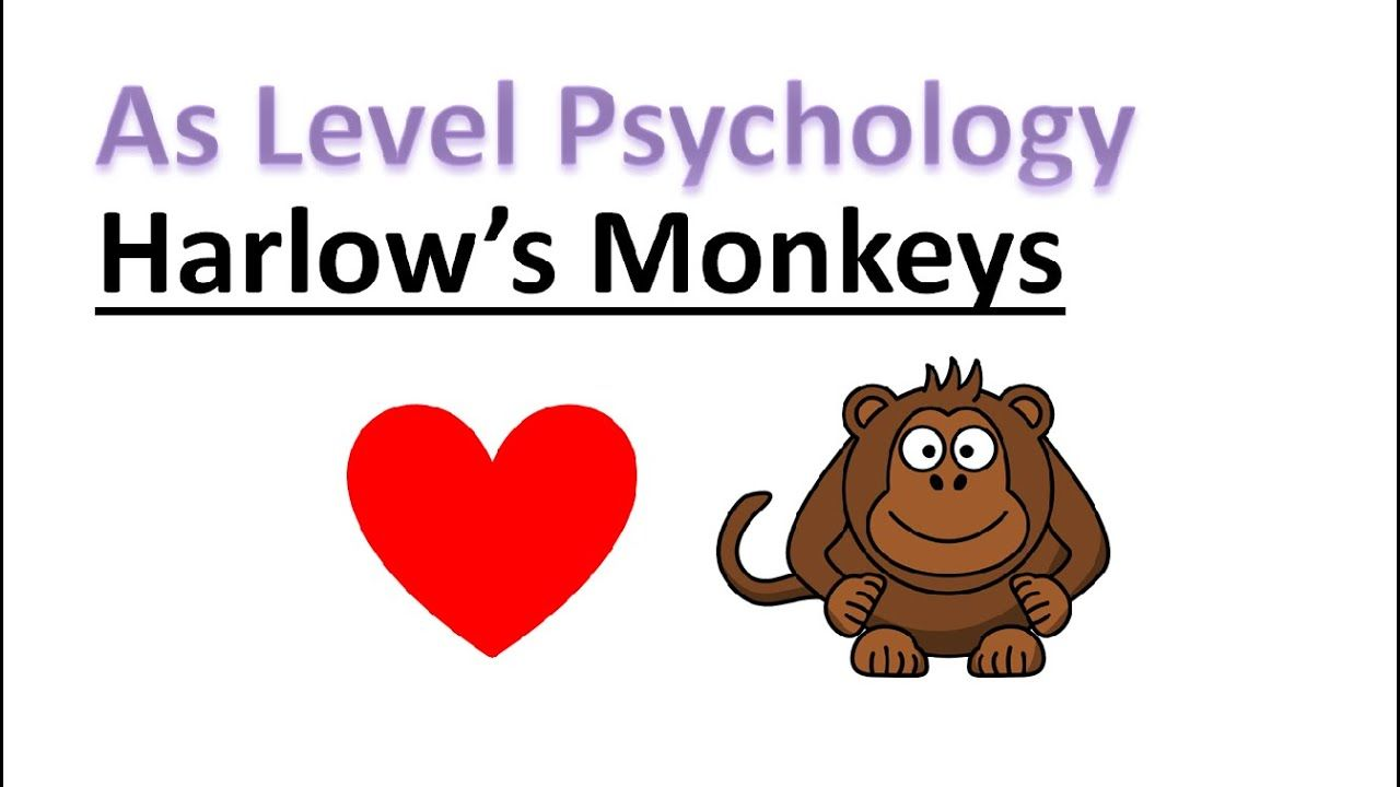 As Psychology Harlow S Monkeys Psychology A Level Psychology A Level Revision