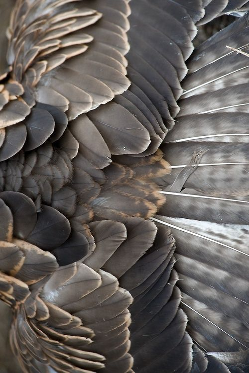 """Feathers// Ps. 91:4…""""He will cover you with His feathers, and under His wings you will find refuge…"""""""