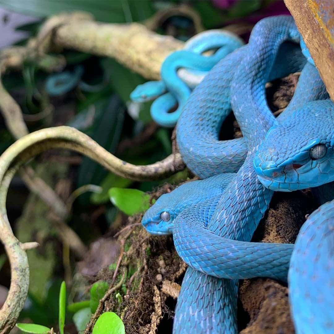 Pin On Lovely Snakes