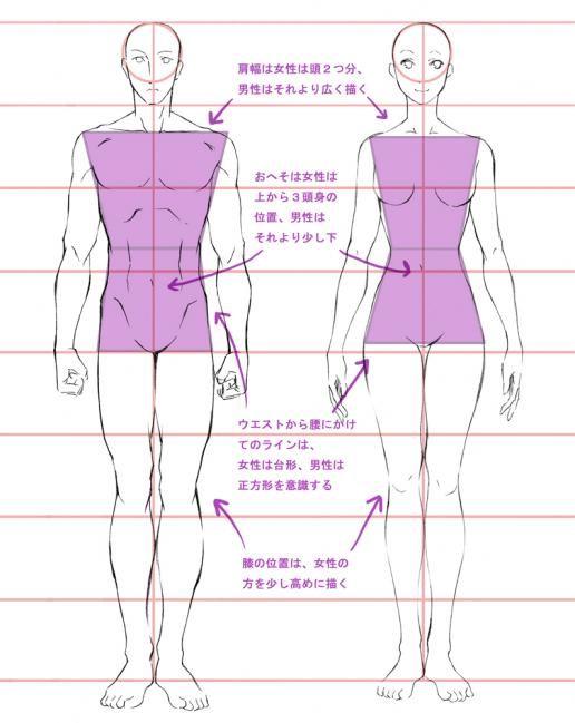 男女比較 正面 イラスト参考 描き方 人物デッサン Y 絵の描き方