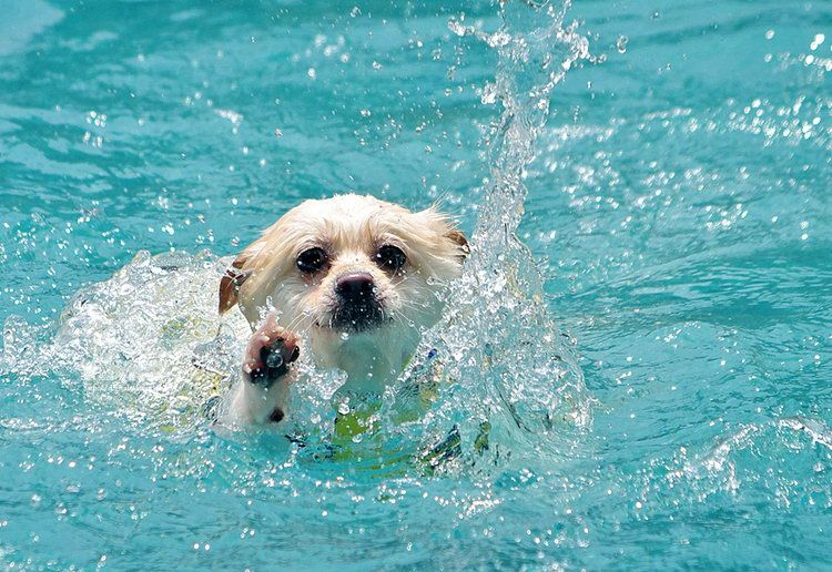 Letting Your Dog Swim Is A Fun Activity But Safety Should Come First Here Are Several Expert Tips For Keeping Pup Safe This Summer