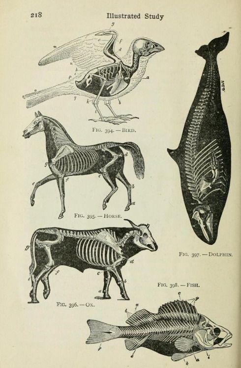 Beginners\' Zoology. 1922. | Illustrations - illusions | Pinterest ...