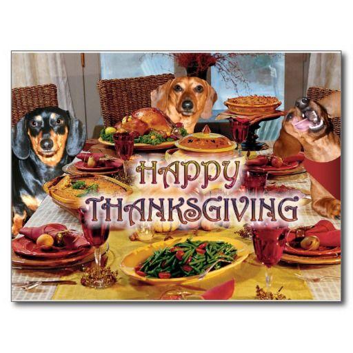 Thanksgiving Dachshunds Holiday Postcard Zazzle Com Dachshund