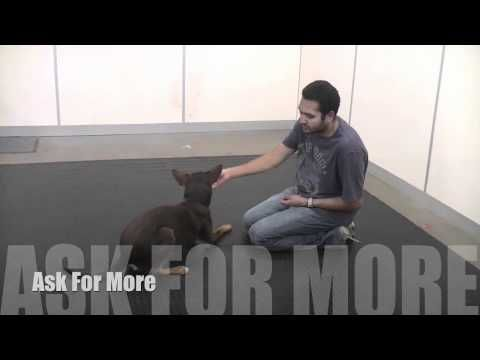 How To Train A Dog To Protect Backyard Chickens Dogs Dog